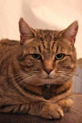 Magnificent cat