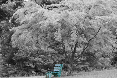 Edited Picture of Bench at the Botanical Gardens