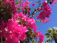 flowers in beautiful Rhodes