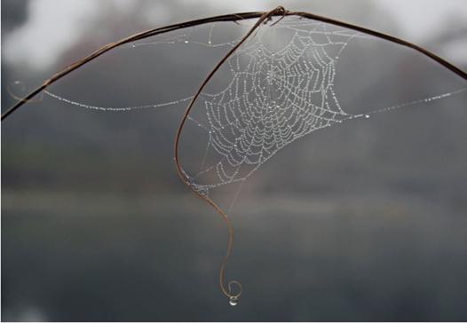 Web Arch