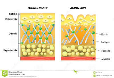 COLLAGEN - WHAT IS IT AND WHY SHOULD YOU KNOW ABOUT IT?