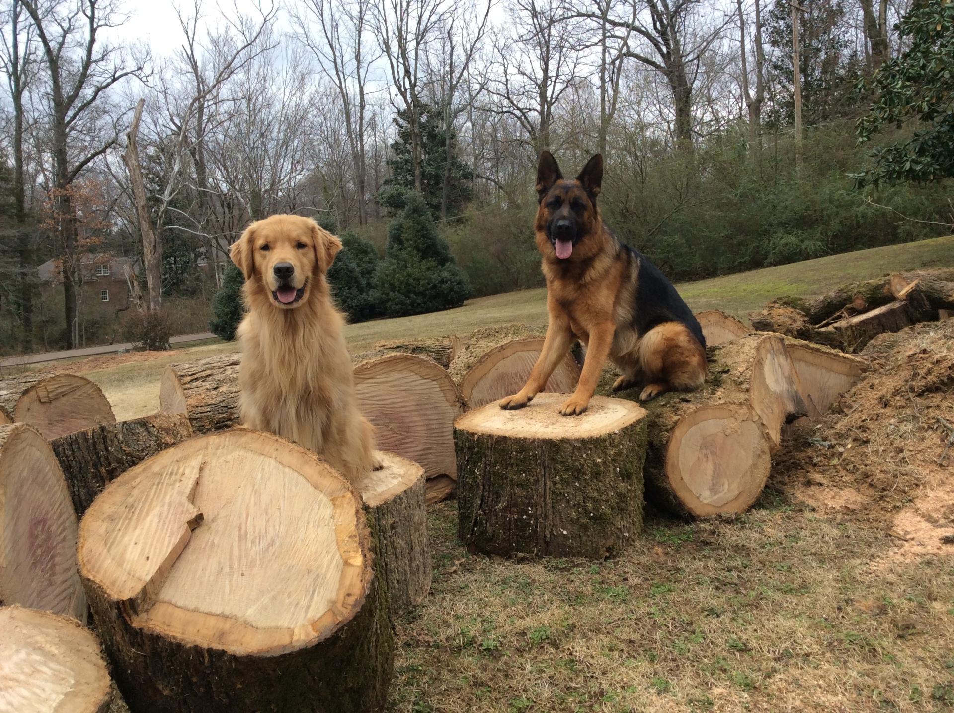 Tree Work