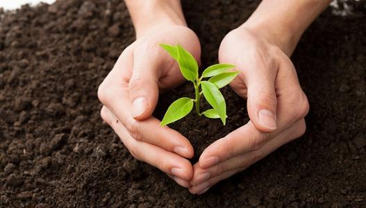 Chinese Government Passed Soil Pollution Prevention and Control Law