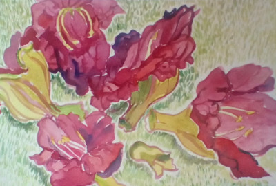 Hawaii Watercolors