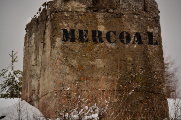 Mercoal Foundation