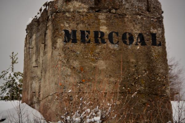 Mercoal Foundation