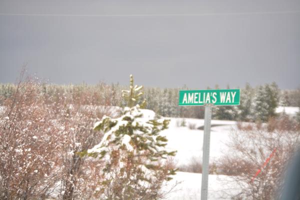 Amelia's Way