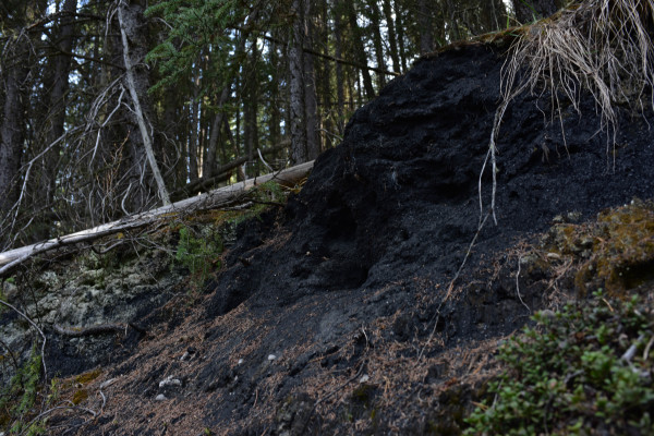 Moss over Coal Slack Heaps