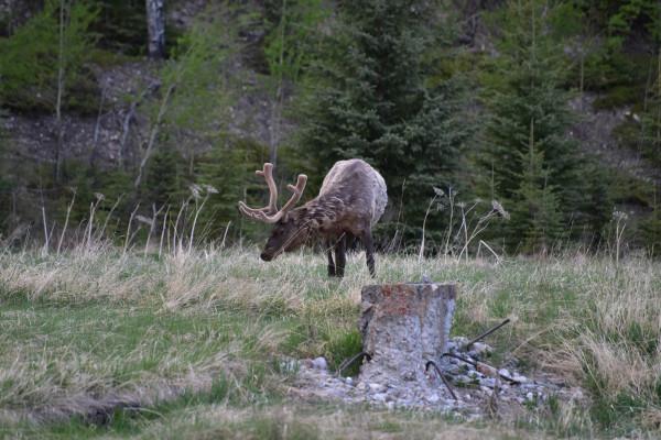 Resident Wildlife
