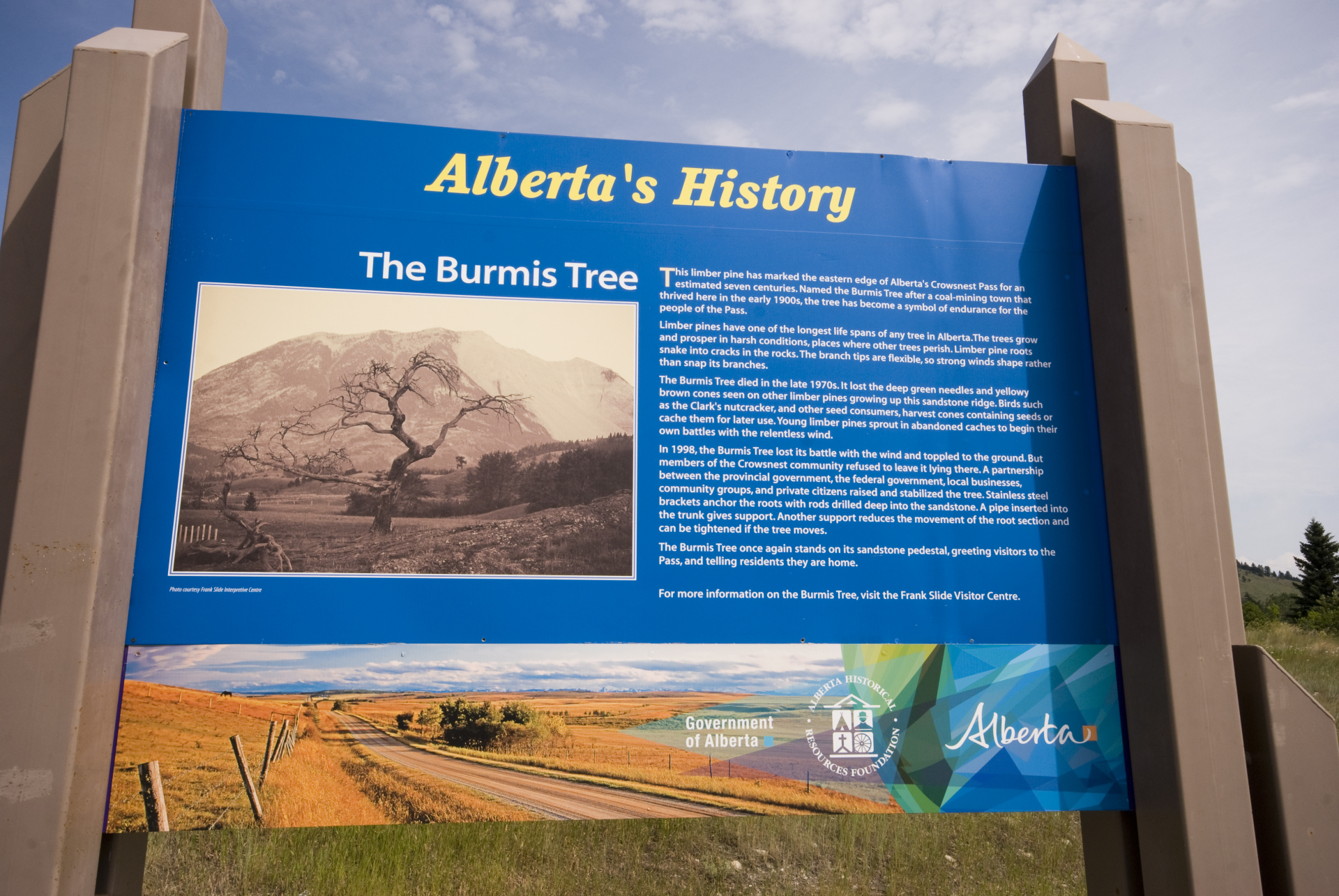 Burmis Tree Sign