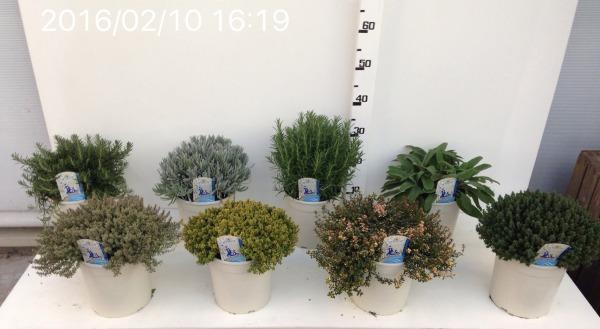 Vaso 18cm misto varietà