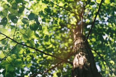 5 Tips for Efficient Tree Maintenance