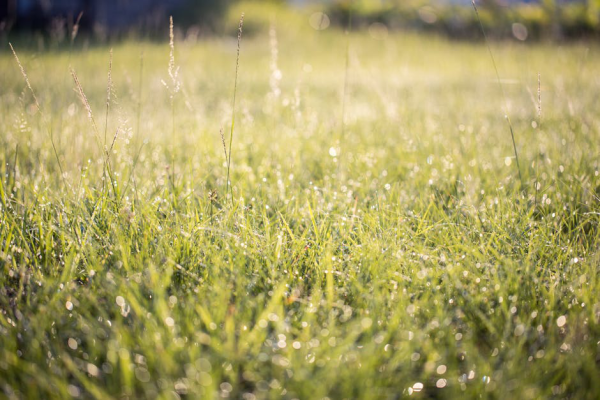 Cold and Yellow: What Causes Grass to Turn Yellow in Winter?