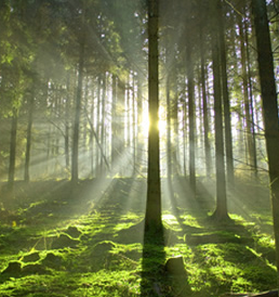 Can You See the Forest For The Trees With Your Enterprise Monitoring?