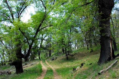 Take your dog on Palomar Mountain Trail