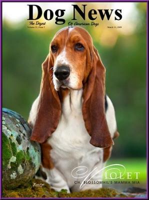 Dog News Cover