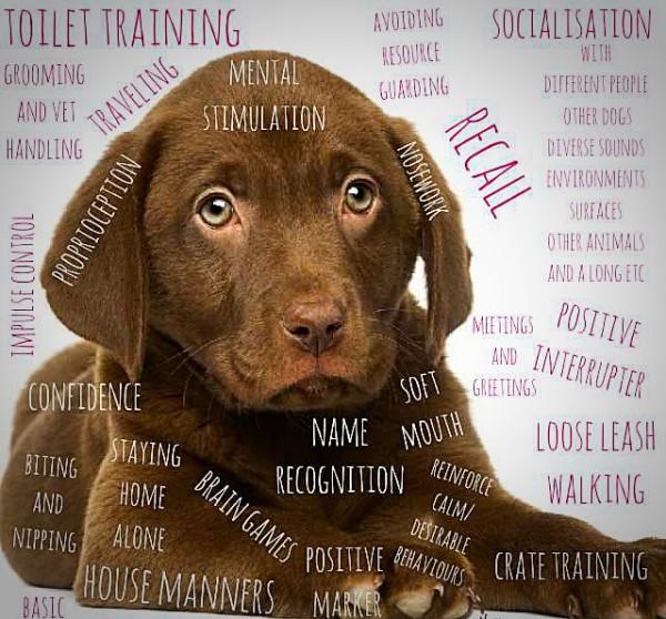 puppy plan