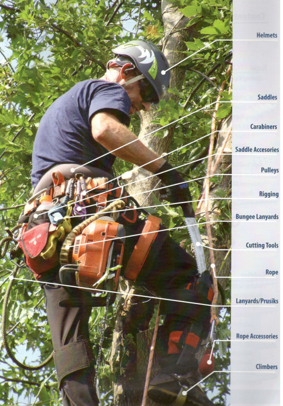 Arborist supplies: Helmets, Saddles and accessories, Carabiners, pulleys, rigging, bungee lanyards, cutting tools, rope, lanyards/prusiks, and climbers