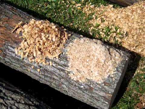 Sharp vs dull chain saw chain