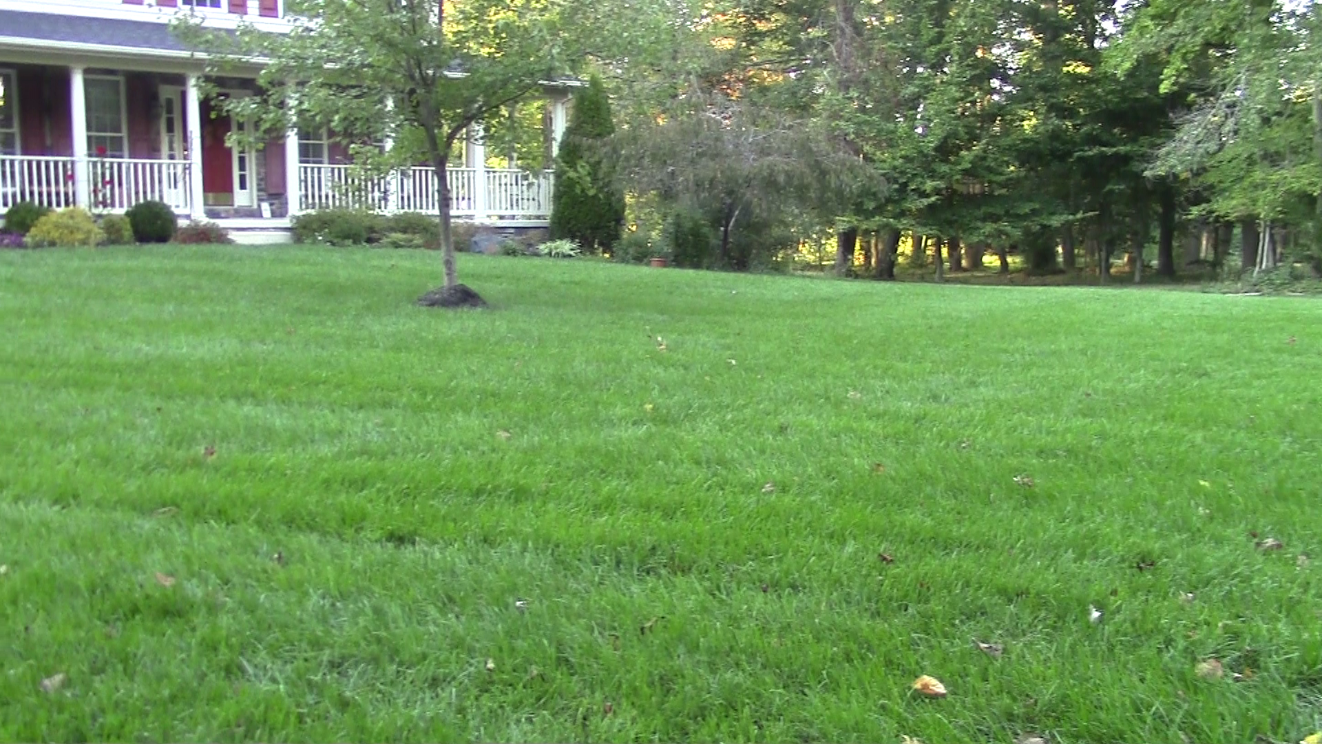 You too can have a lawn like this - follow this blog to see how