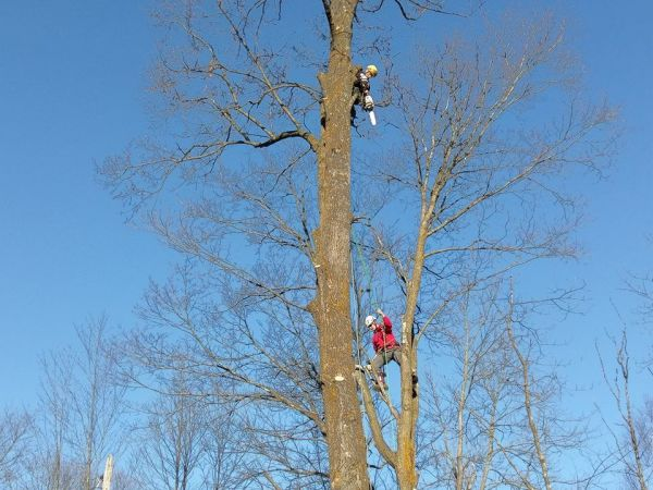 Two tree climbers