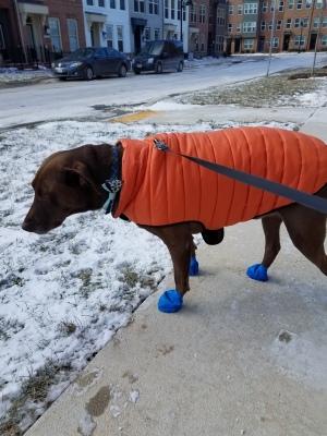 Reese wearing his Salt Socks