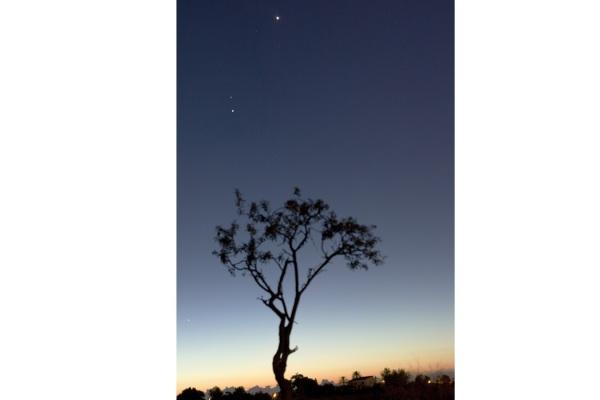 De arriba a abajo Venus, Marte, Júpiter y Mercurio son los cuatro astros que aparecen en esta fotografía, los tres primeros por encima del árbol y el último de ellos a su izquierda. Fotografía tomada el 15 de Octubre 2015 al amanecer.