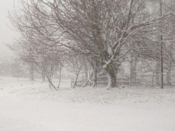 snow, winter time