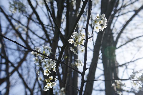 Spring at Stonegate Village, Champaign, IL