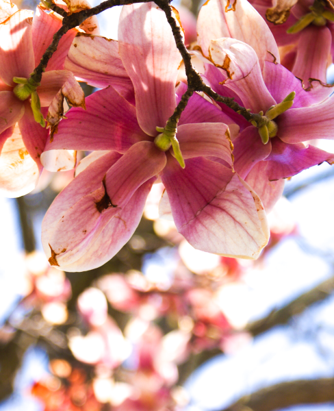Spring at Stonegate Village: Pink Flowers in Bloom!