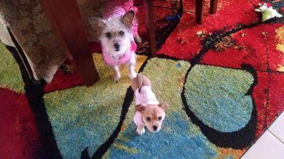 Lola & Luzi