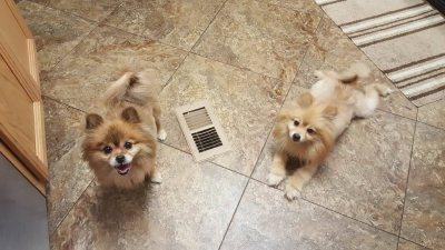 Tikki & Cleo