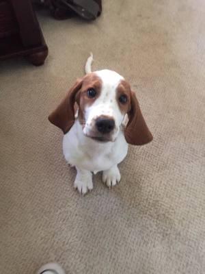 Puppy Basics