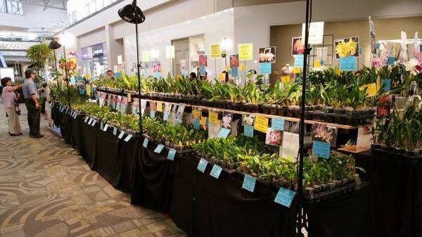 Kawamoto Orchid Nursery Is Going To Participate In These