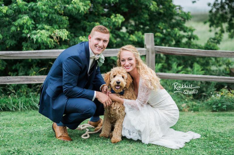 F1 standard goldendoodle puppy