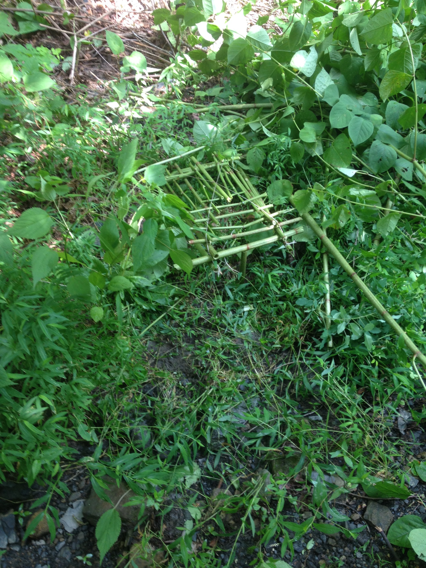 Primitive Trap:  Bird Cage type trap with split stick trigger