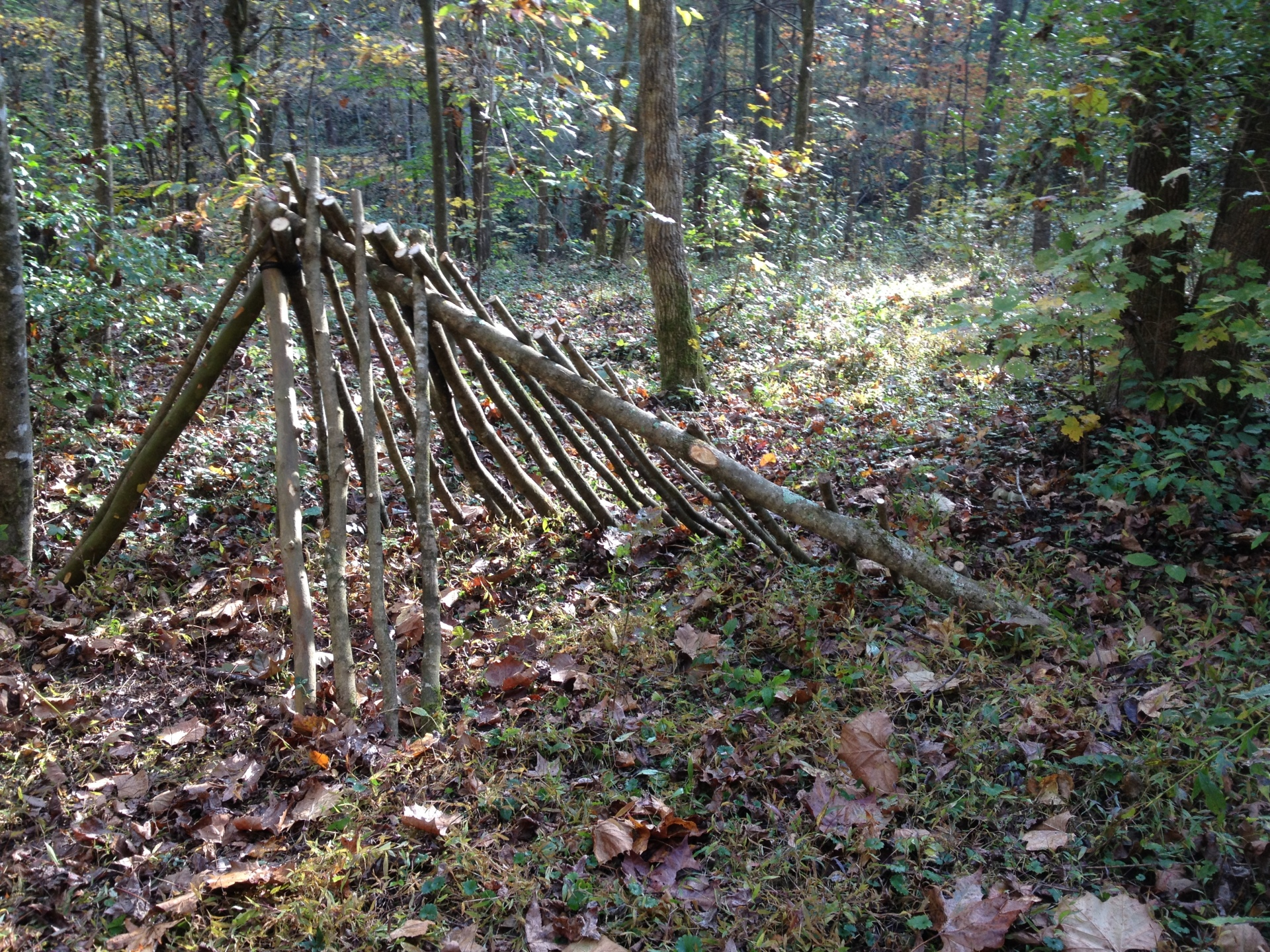 Debris Hut Skeleton