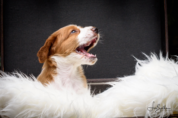 A Trystyn Puppy