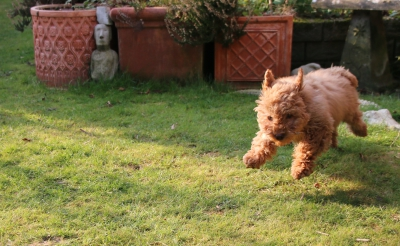 I can jump and pounce