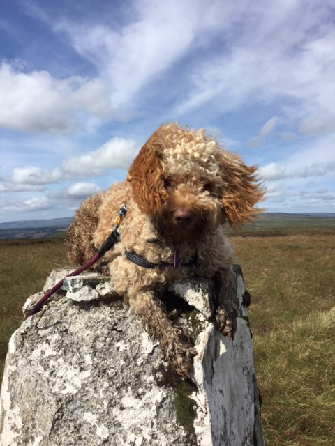 This trig point is falling to bits