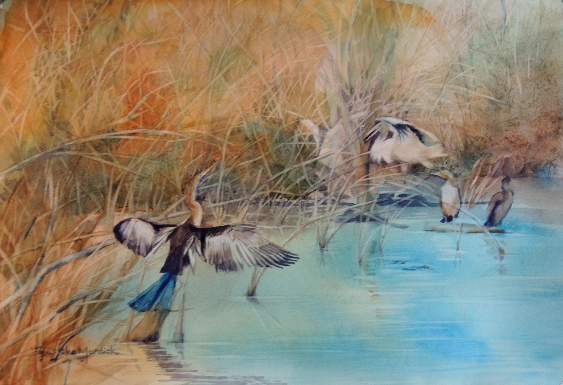 Waterbird Series