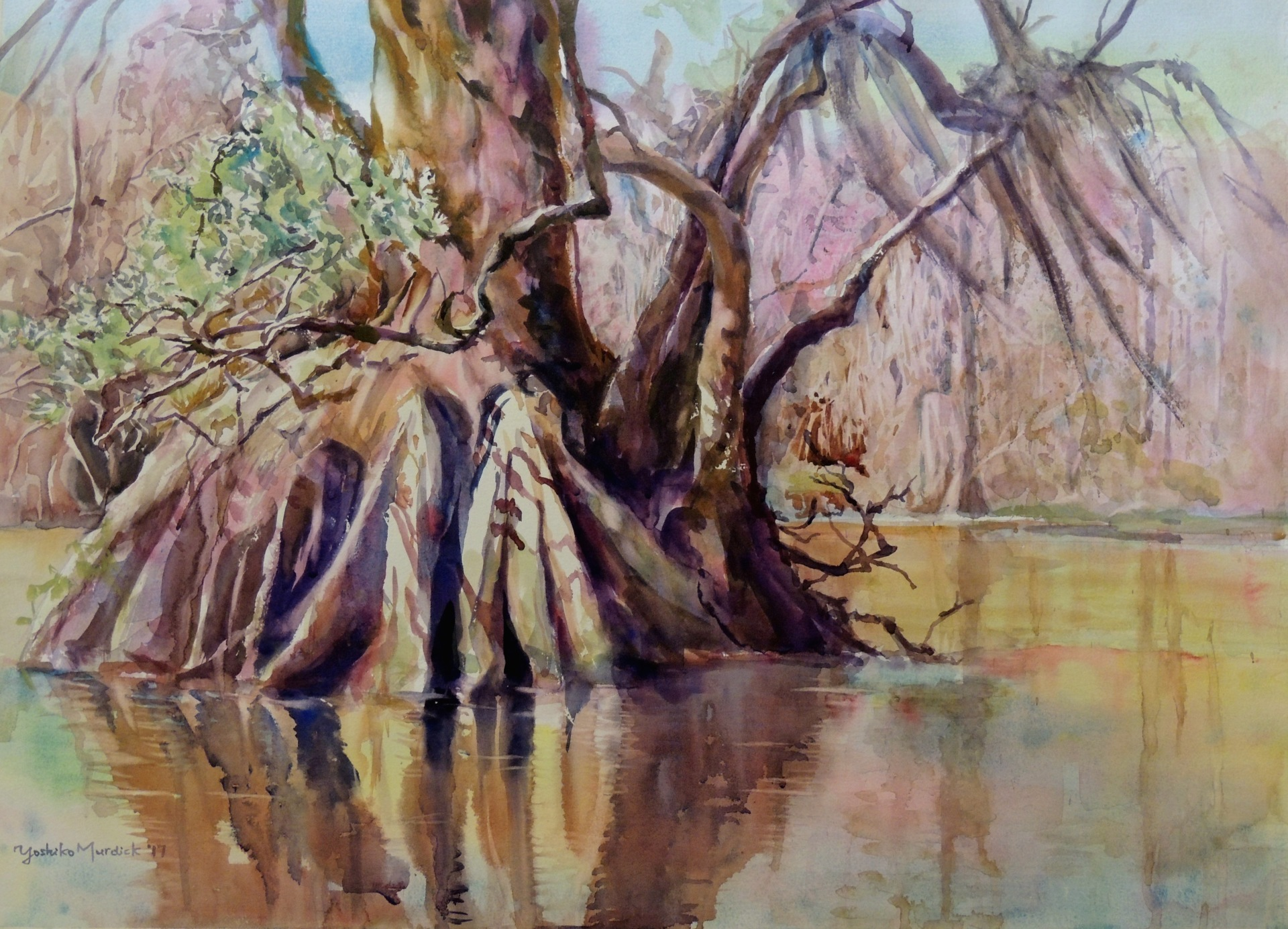 Cypress in the Wakulla (2017)