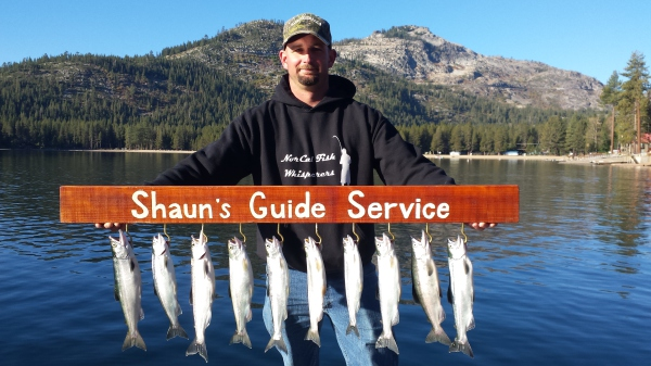 Donner Kokanee salmon limits