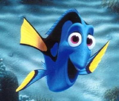 My Similarity to Dory Fish
