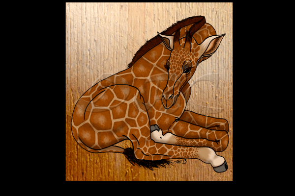baby giraffe, maternity, pregnant, expecting a child, due date, pregnancy, baby animal collection