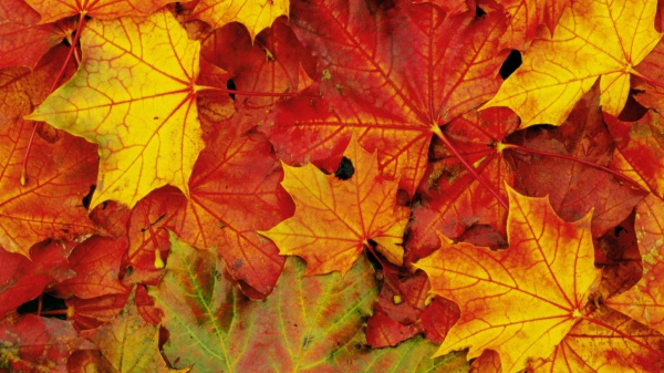 3 Tips for Feeling Fantastic in the Fall