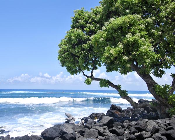 Kona Shore