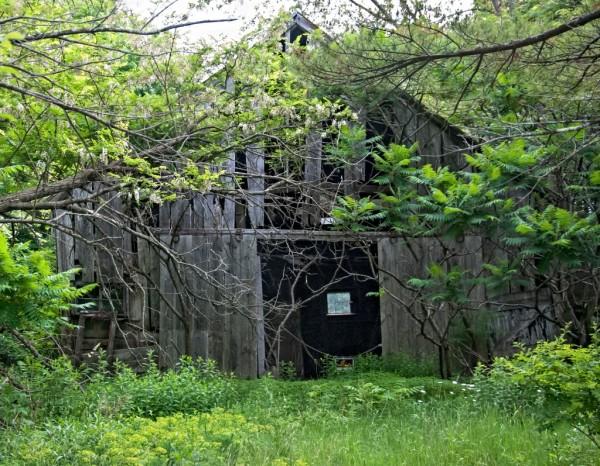 Old Barn - Bowdoin