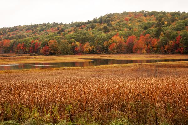 Autumn Salt Marsh