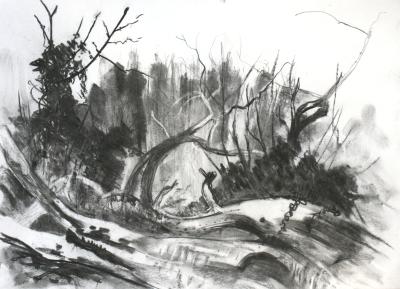 Late Winter, Wilderness Island Carshalton
